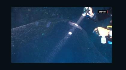 150803142446-mysterious-giant-ocean-blob-squid-mass-orig-00004001-full-169